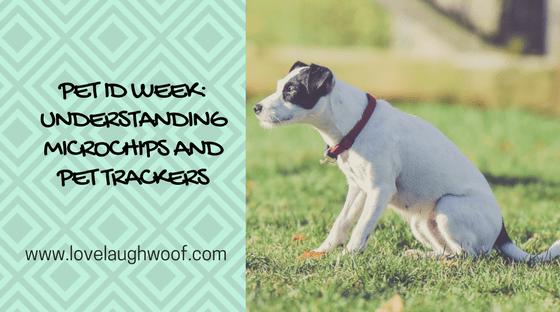 Pet ID Week Understanding Microchips and Pet Trackers