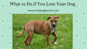 What to do if you lose your dog.