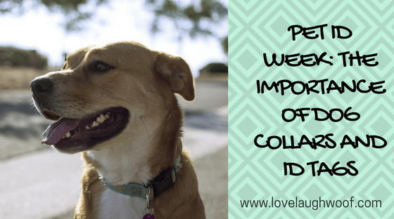 Pet ID Week: The Importance of Dog Collars and Identification Tags