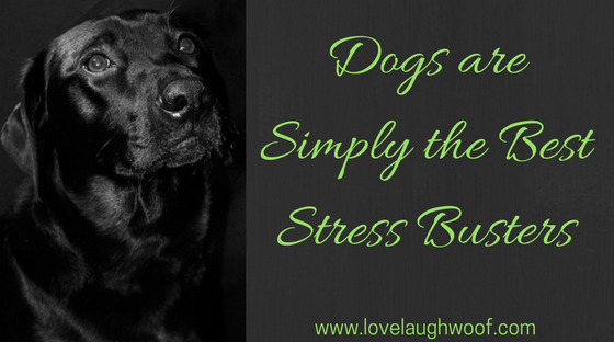Dogs are Simply the Best Stress Busters