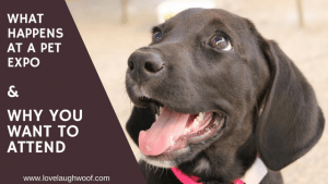 What Happens at a Pet Expo and Why You Want to Attend