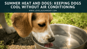 Summer Heat and Dogs: Keeping Dogs Cool Without Air Conditioning