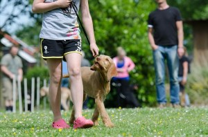 Why Every Dog Should Go To Obedience Class