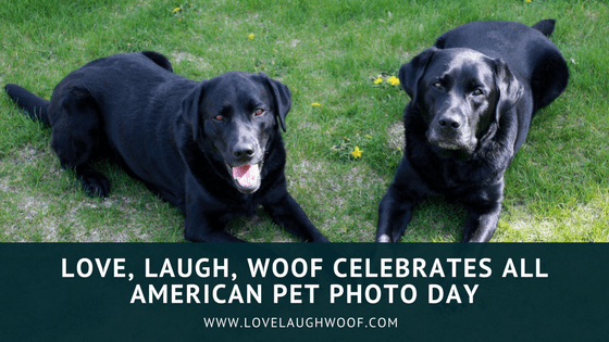 Love, Laugh, Woof Celebrates All American Pet Photo Day