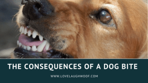 The Consequences of a Dog Bite