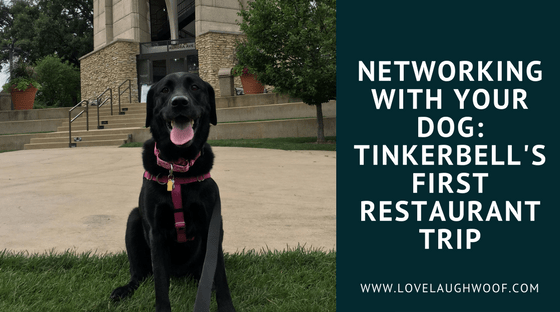Networking With Your Dog: Tinkerbell's First Restaurant Trip