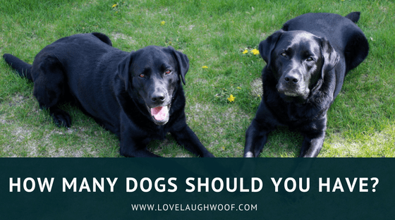 How Many Dogs Should You Have?