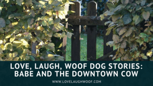 Love, Laugh, Woof Dog Stories: Babe and the Downtown Cow