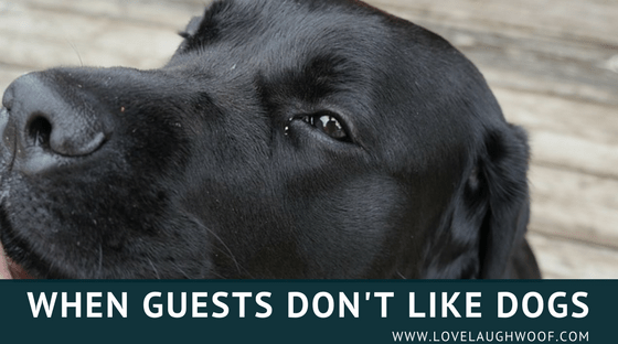 When Guests Don't Like Dogs
