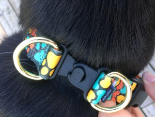 Tinkerbell looks stunning in the pawprint KeepSafe Break-Away collar!