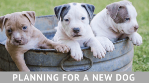 Planning for a new puppy or dog