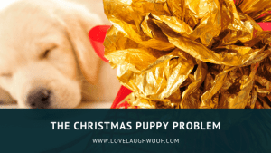 The Christmas Puppy Problem