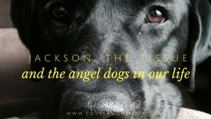 Jackson and the Tissue and the Angel Dogs in Our Life
