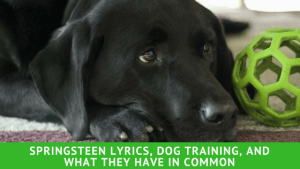 Springsteen Lyrics, Dog Training, and What They Have in Common