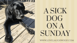 a sick dog on a sunday