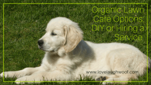Organic Lawn Care Options: DIY or Hiring a Service