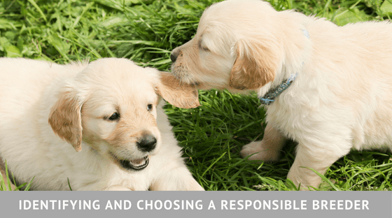 Identifying and Choosing a Responsible Breeder