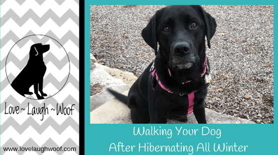 Walking Your Dog After Hibernating All Winter from the Love Laugh Woof dog lifestyle blog from Lynn Stacy-Smith