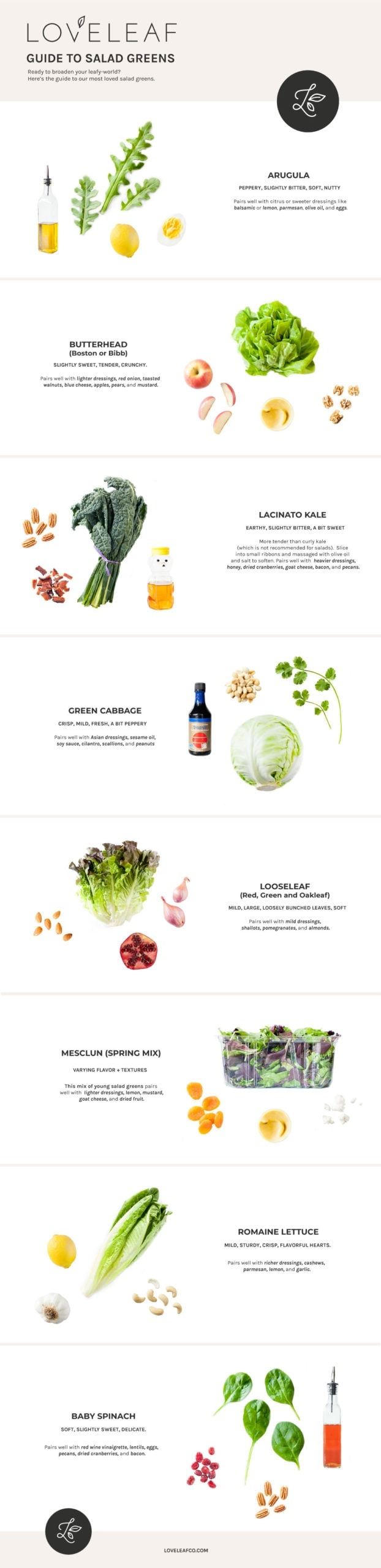 Guide to salad greens infographic.