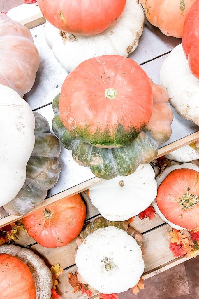 Mix of fall pumpkins.