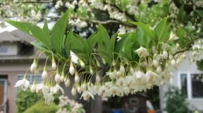 tree hanging flowers