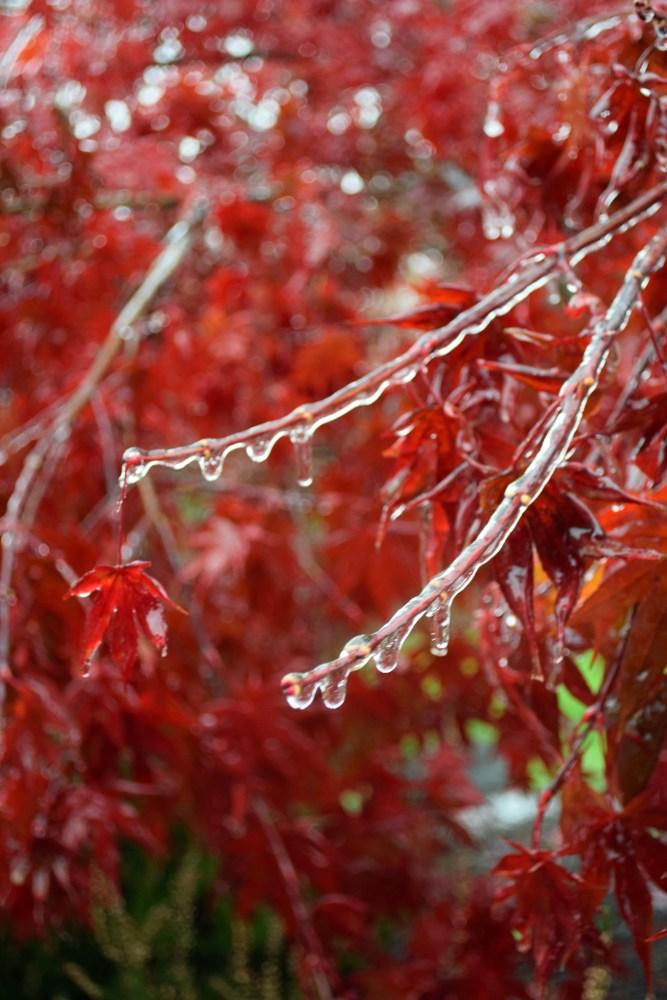November Ice (1/4)