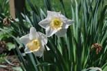West Virginia Spring