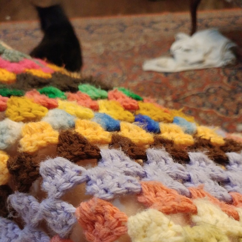 Cat and Afghan UnwifedmotherExpletive