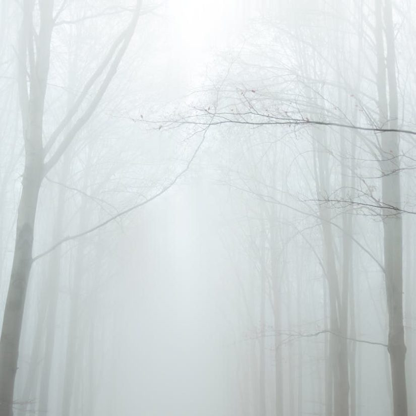 a person standing in the middle of a foggy forest