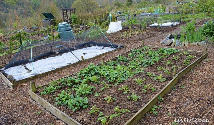 Budget Gardening Idea Create Wood Chip Garden Paths