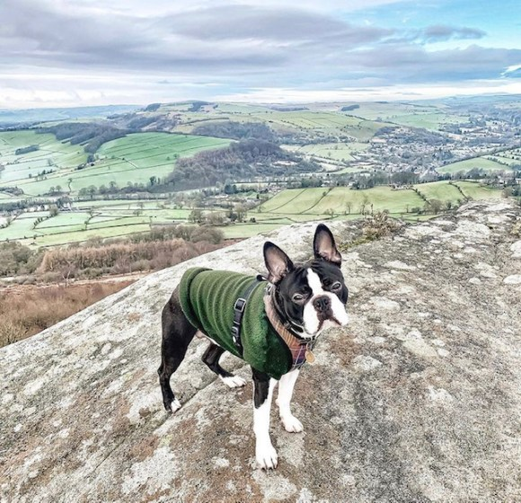 dog friendly places to eat in Derbyshire