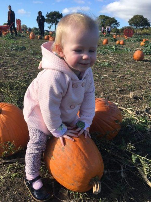 pumpkin picking Derby