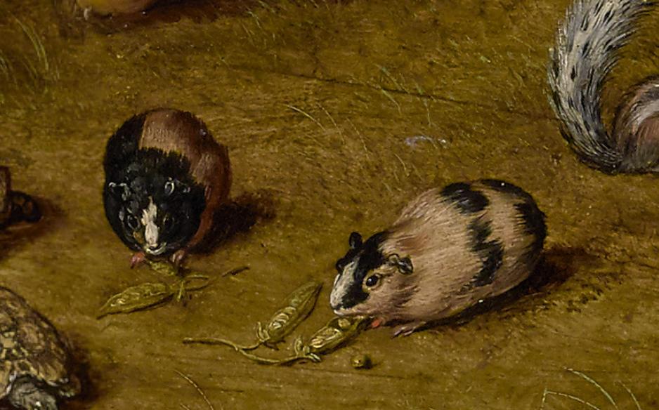 原來伊莉莎白女王也是鏟屎奴!天竺鼠是如何成為寵物的?