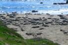 Point Piedras Blancas - Elephant Seal Colony