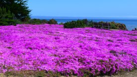 Spring in Pacific Grove