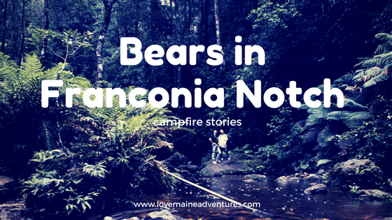 Bears in Franconia Notch - Campfire Stories