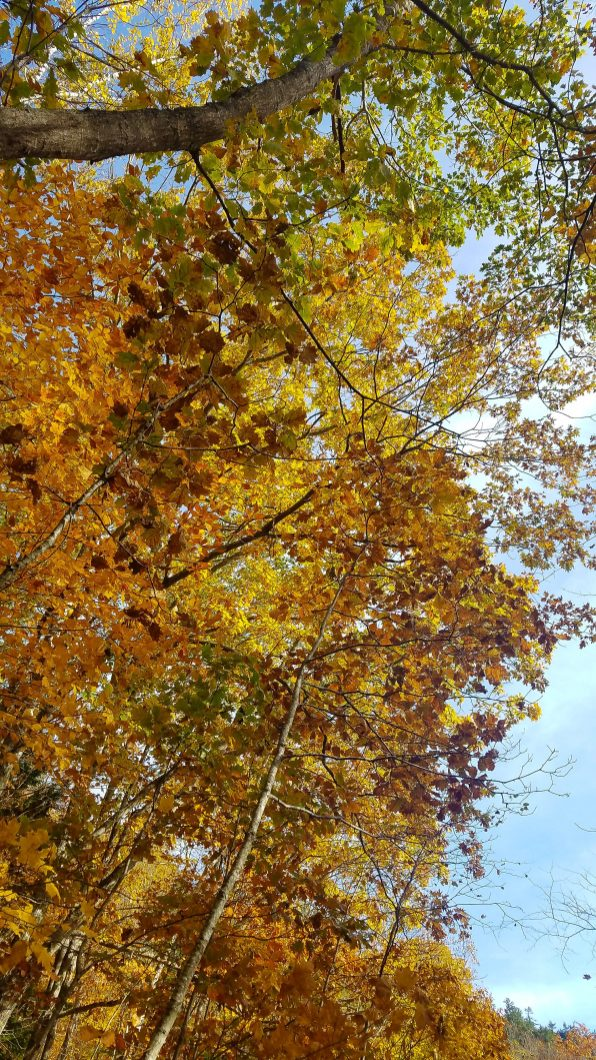 Fall in Maine, fall hikes, hikes for beginners, hikes near me, maine adventures, fall hikes, short hikes, hikes for kids, hikes with dogs in Maine
