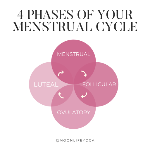 4 phases of the menstrual cycle infographic