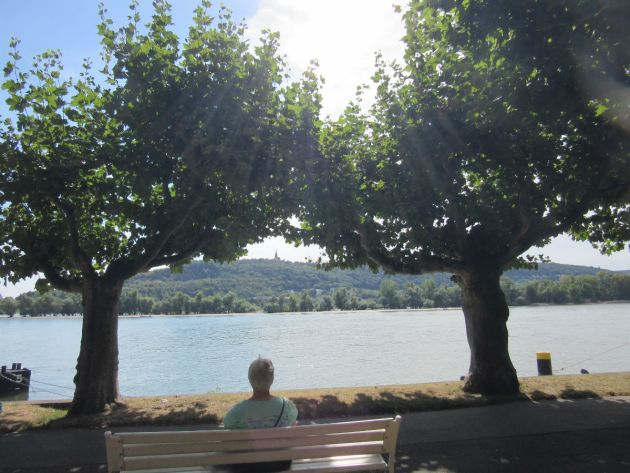 Shirley contemplates the cool water of the Rhine