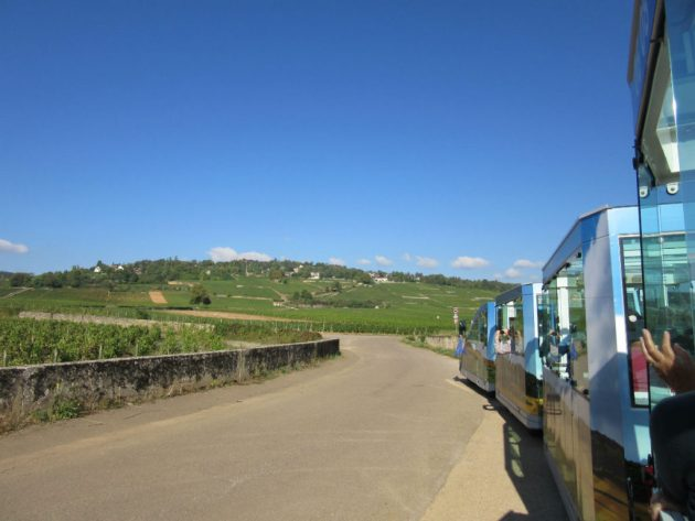 On the tourist train in the vineyards