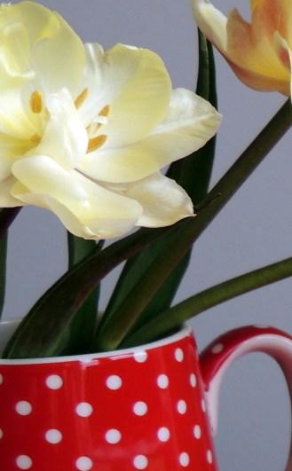 Spring green tulipan