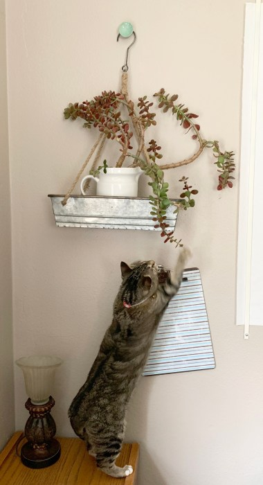 Mia Getting Plant