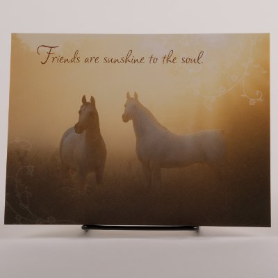 Friendship Birthday Card By Mark J Barrett Horse Theme Gifts When It Has To Have A Horse On It