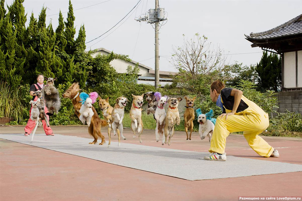 Самое больше количество собак, прыгающих через одну веревку