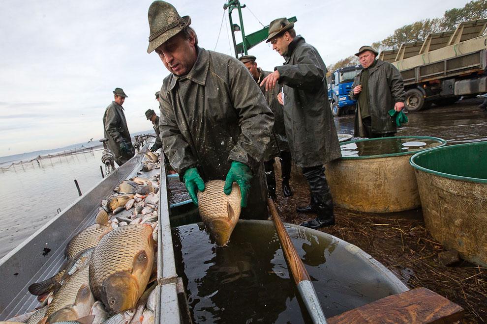 карповская ловля рыбы