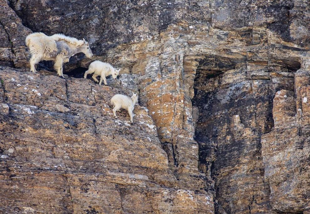 Скалолазы животного мира