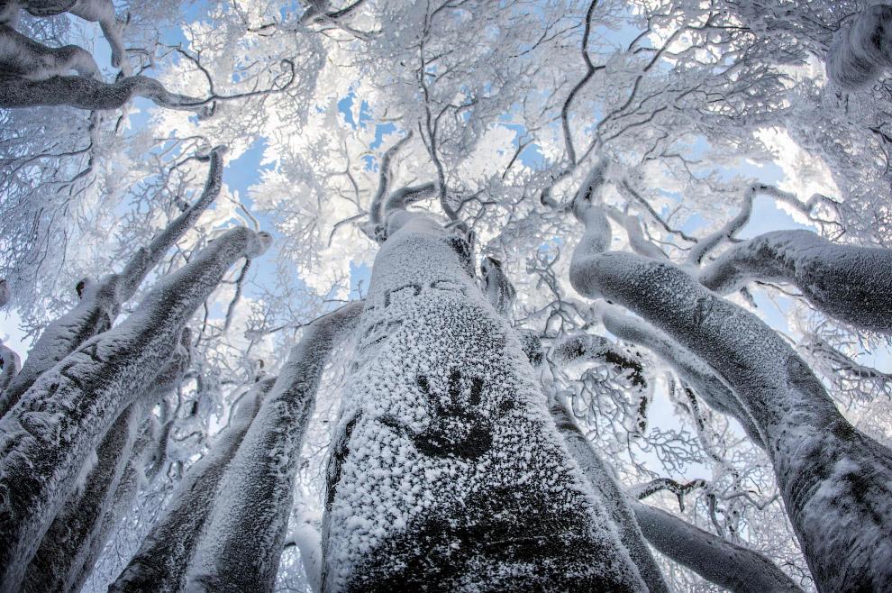Сказочные зимние деревья на горном хребте Таунус в Германии
