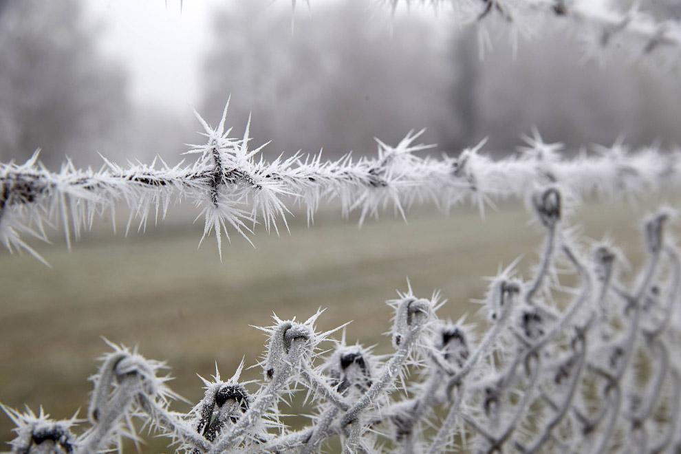 Красивейший зимний забор