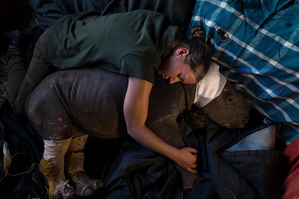 Носорожек в приюте для ухода за ранеными животными