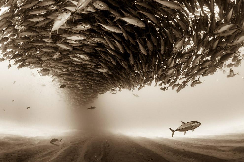 Огромный косяк рыбы и 3-е место в категории «Природа»